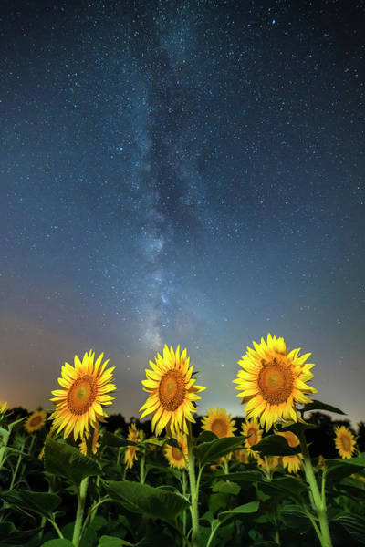 Sunflower Galaxy IIi Art Print