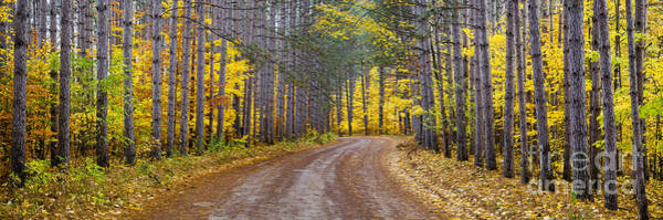 Manistee National Forest Wall Art - Photograph - The Road To Rainbow Bend by Twenty Two North Photography