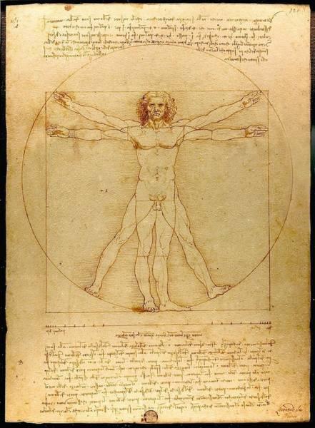 Drawing - Vitruvian Man by Leonardo Da Vinci