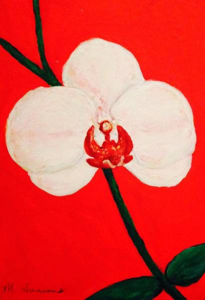 Wall Art - Painting - White Orchid  by Majaia Summers