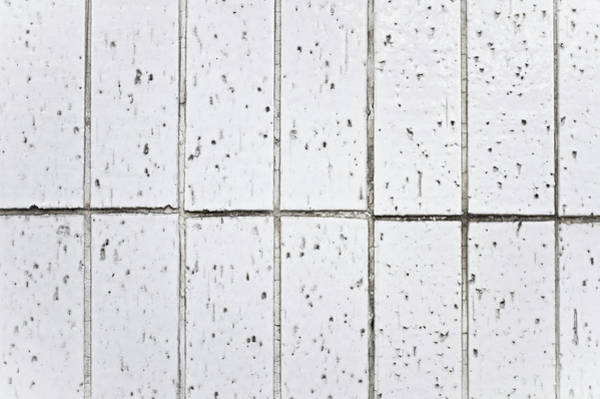 Wall Art - Photograph - White Tiles by Tom Gowanlock