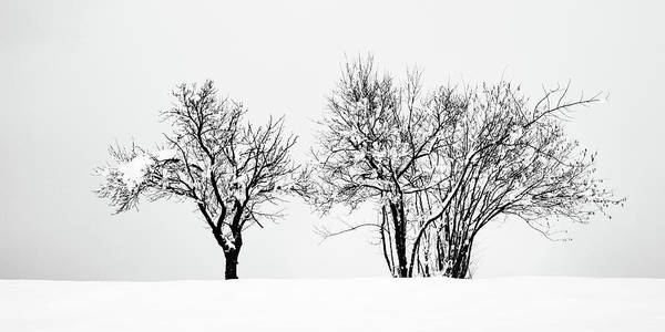 Wall Art - Photograph - Winter by Ian Middleton