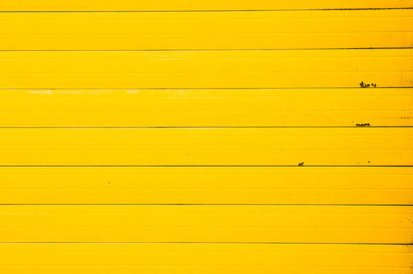 Iron Fence Wall Art - Photograph - Yellow Metal by Tom Gowanlock
