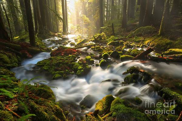 Photograph - Streaming Through Sol Duc by Adam Jewell