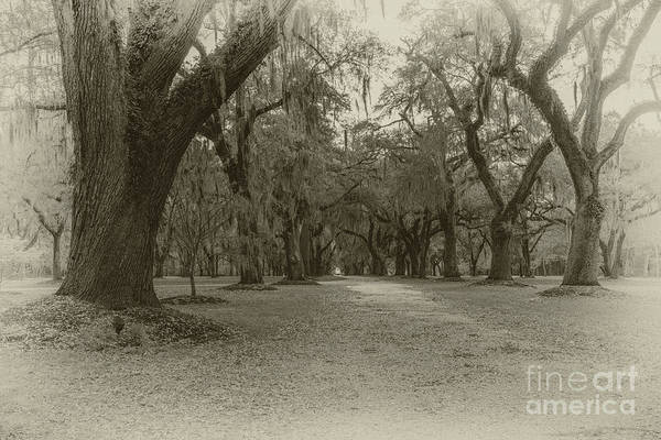 Photograph - Lowcountry Live Oak Tree Majesty by Dale Powell