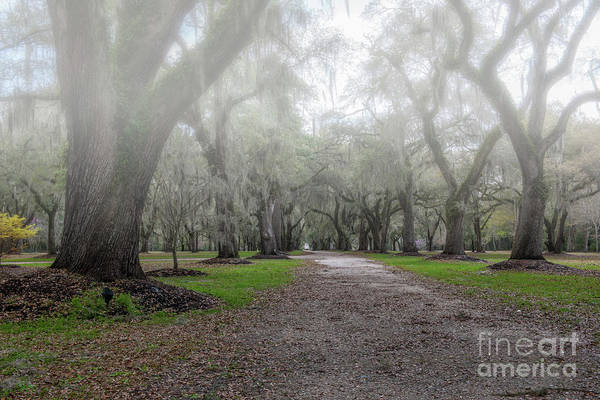 Photograph - Fog Over Live Oak's  by Dale Powell