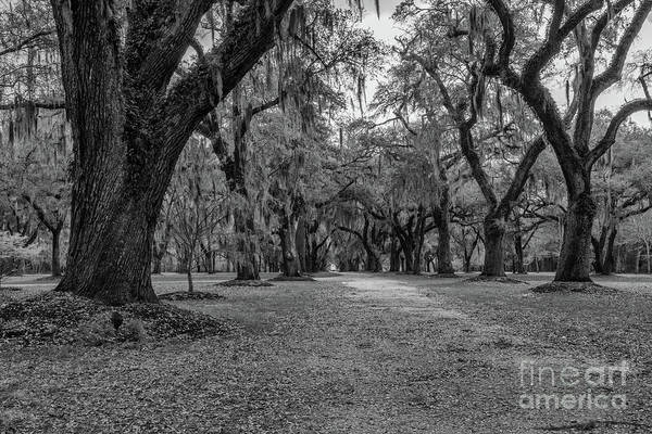 Photograph - Allee Of Tree's by Dale Powell