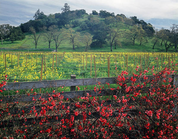 Photograph - 5b6301 Vineyards Of Color by Ed Cooper Photography