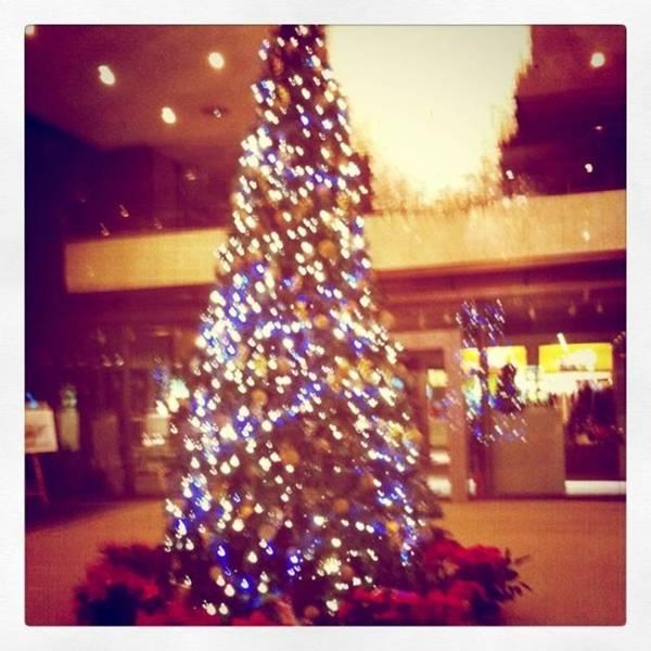 Photograph - クリスマスツリー by Masamichi Takano