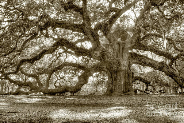 Southern Photograph - Angel Oak Live Oak Tree by Dustin K Ryan