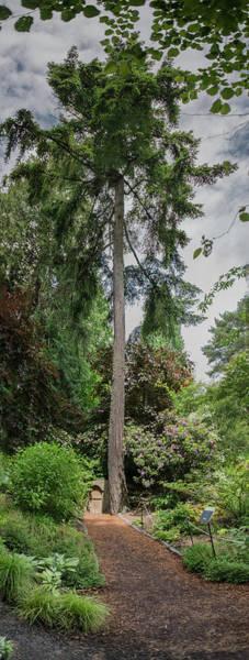 Photograph - Bellevue Botanical Gardens by Michael Bessler