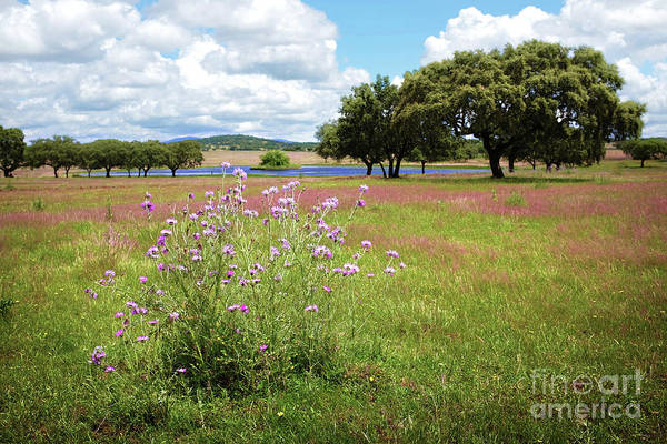 Wall Art - Photograph - Countryside Landscape by Carlos Caetano
