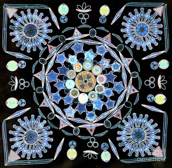Microscopy Photograph - Diatoms by M I Walker