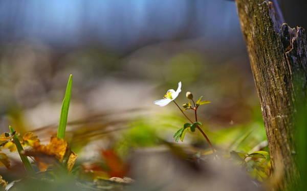 Animal Digital Art - Flower by Maye Loeser