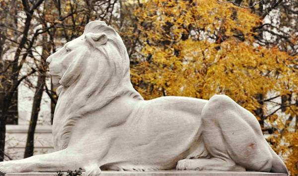 Photograph - Library Lion On Guard by JAMART Photography