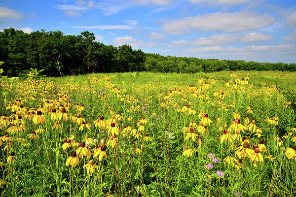 Photograph - Marengo Ridge Wildflowers by Ray Mathis