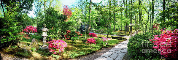 Photograph - Nature Background Panorama by Ariadna De Raadt