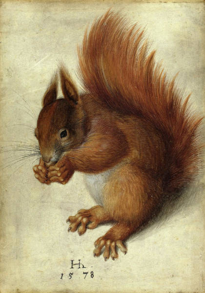 Red Squirrel Wall Art - Painting - Red Squirrel by Hans Hoffmann