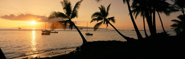 Peacefulness Photograph - Silhouette Of Palm Trees At Dusk by Panoramic Images