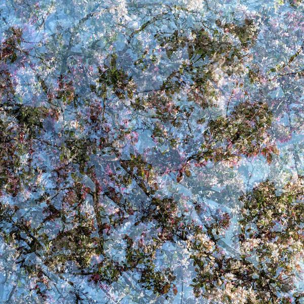 Photograph - Spring Season - Inspired By Jackson Pollock by Shankar Adiseshan