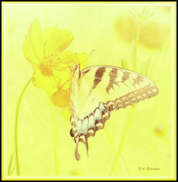 Tiger Swallowtail Butterfly On Cosmos Flower Art Print