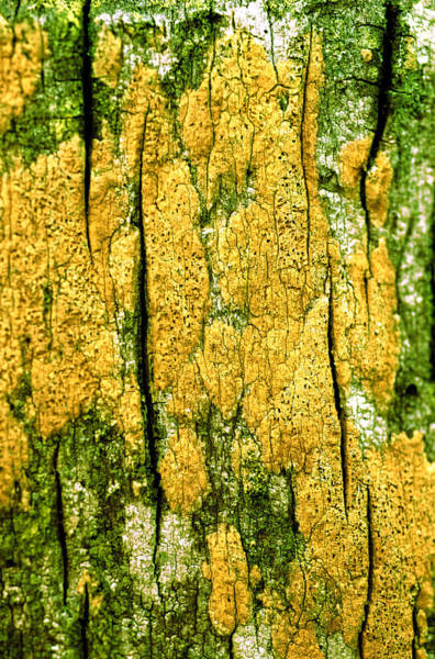 Texture Photograph - Tree Bark by John Foxx