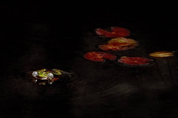 Frog Photograph - Untitled by Antonio Grambone