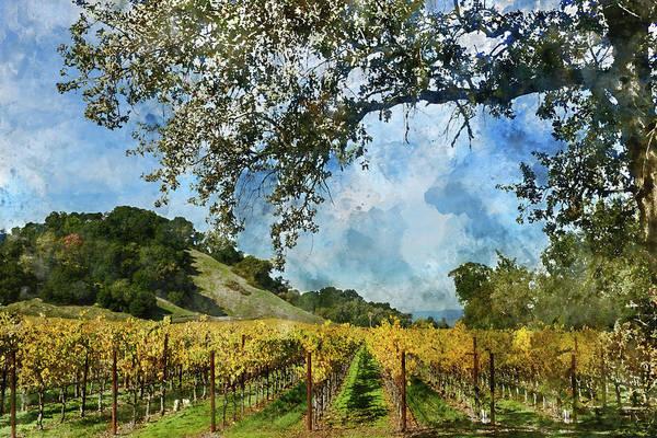 Photograph - Vineyard In Napa Valley California by Brandon Bourdages