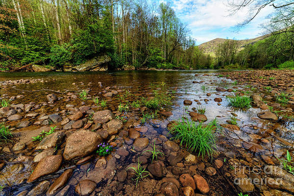 Trout Stream Photograph - Williams River Spring by Thomas R Fletcher
