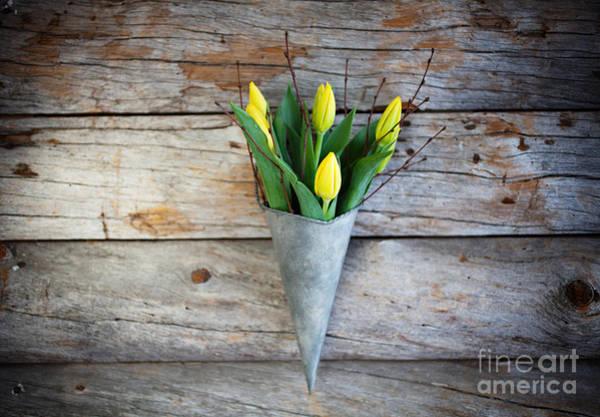 Wall Art - Photograph - Yellow Tulips by Kati Finell