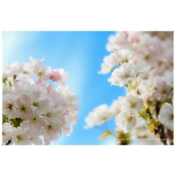 Blossom Photograph - Instagram Photo by Mandy Tabatt