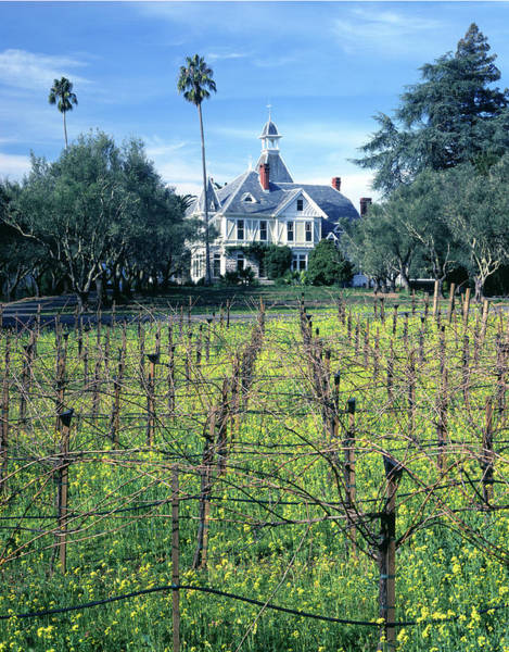Photograph - 6b6313 Falcon Crest Set At Spring Mountain Vineyard by Ed Cooper Photography