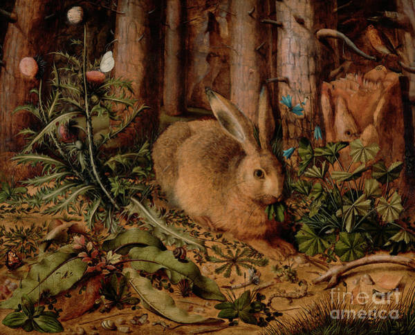 Wild Rabbit Painting - A Hare In The Forest by Hans Hoffmann
