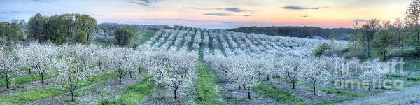 Traverse City Photograph - Cherry Blossoms In Traverse City by Twenty Two North Photography