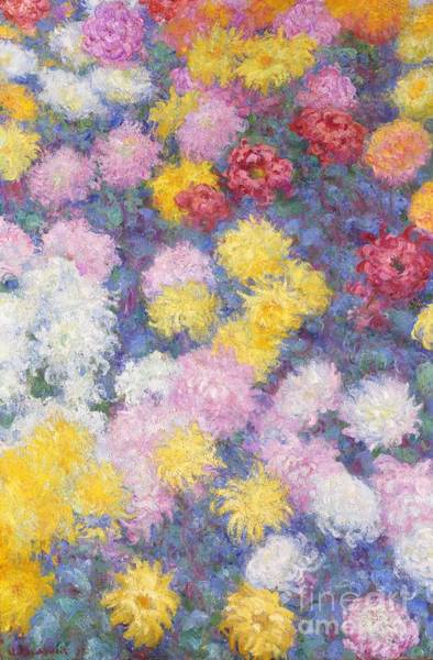 Monet Painting - Chrysanthemums by Claude Monet