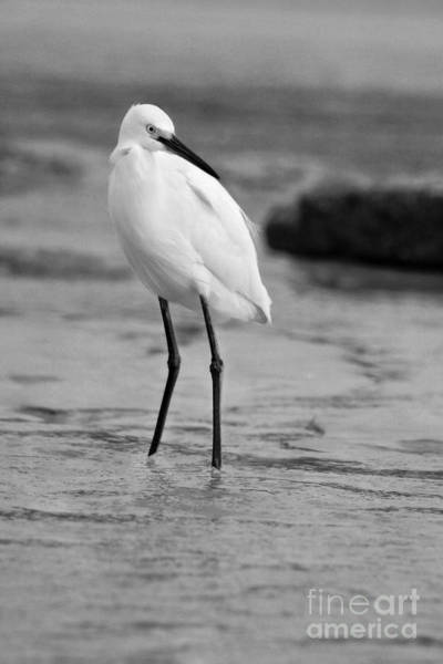 Photograph - Egret In Black And White by Angela Rath