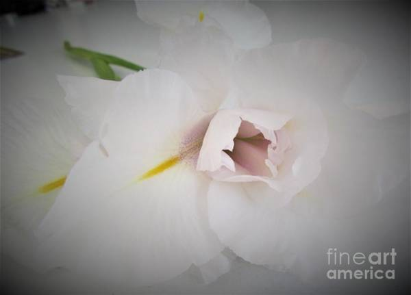 Photograph - Flower by Joyce Woodhouse