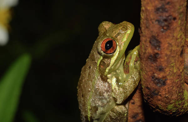 Photograph - Frog by Larah McElroy