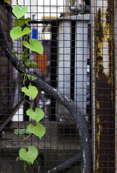 Wall Art - Photograph - 7 Hearts by Prakash Ghai