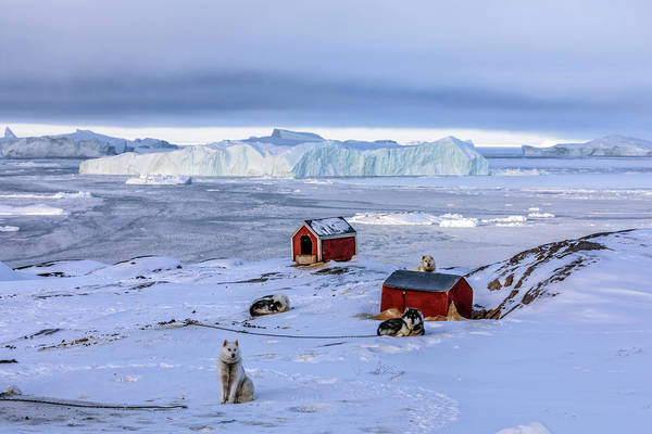 Schnee Wall Art - Photograph - Huskies In Ilulissat, Greenland by Joana Kruse