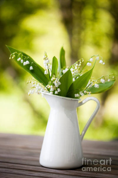 Wall Art - Photograph - Lily Of The Valley by Kati Finell