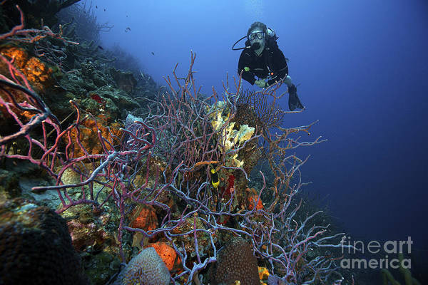 Sponge Photograph - Scuba Diver Swims Underwater Amongst by Terry Moore