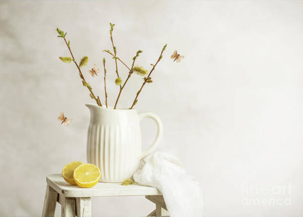 Ladders Photograph - Spring Still Life by Amanda Elwell