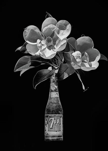 Photograph - 7 Up And Magnolia Still Life Black And White by JC Findley