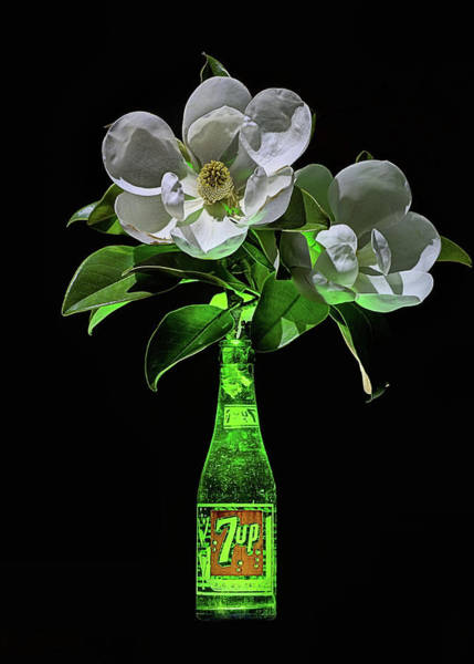 Photograph - 7 Up And Magnolia Still Life by JC Findley