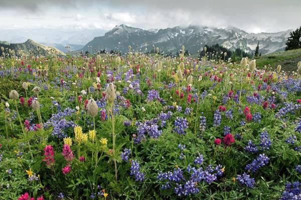 Alpine Meadows Photograph - Wildflower Meadow by Bob Gibbons
