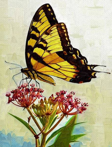 Butterfly On Flower Digital Art - Untitled by Zannie B