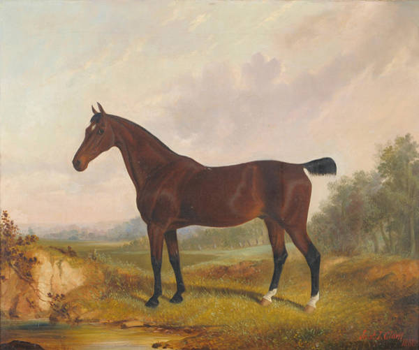 Wall Art - Painting - Horse Standing Beside A Pond by MotionAge Designs