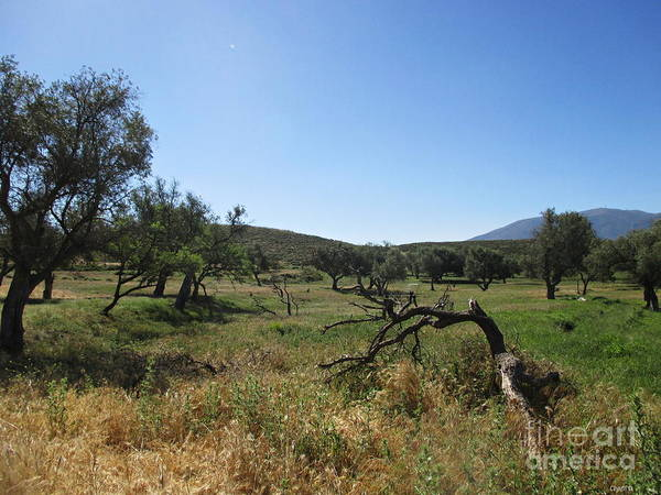 Balneario Wall Art - Photograph - Olive And Almond Trees Near Lanjaron by Chani Demuijlder