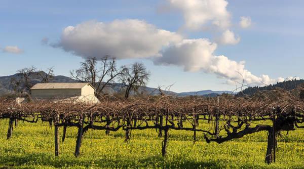Wild Grape Photograph - Napa Valley Vineyard by Mountain Dreams